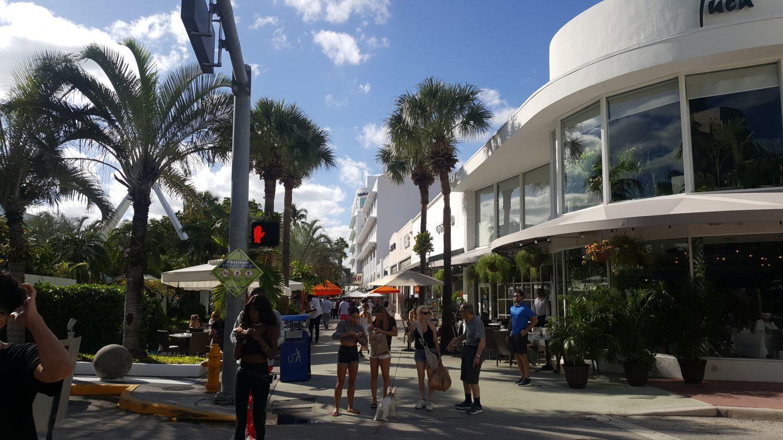 dogs of miami, miami shoppers, miami dogs, staceessmoothie, stacees smoothie, stacee's smoothie, miami, streets of miami, miami streets, miami heat, palm trees, shop in miami, miami shopping